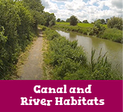 Canal and River Habitats